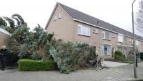 Veel bomen omgewaaid in Edam-Volendam
