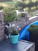 Hond in gesprek met de buurtkat