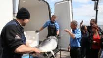 Bluefin-tonijn op het menu van Vishandel Koning